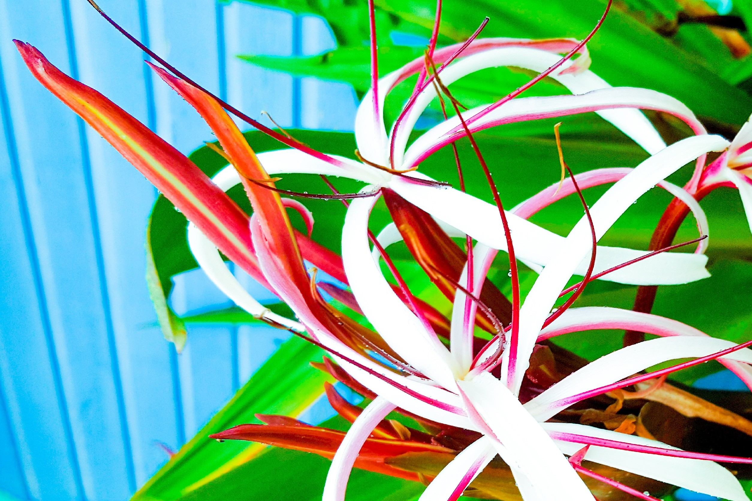 Floral pictures taken in Central America Adobe_20190310_100841Adobe_20190310_101144LRM_EXPORT_379961
