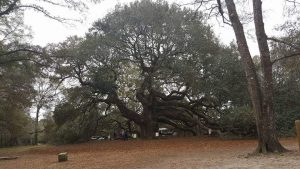 I photographed Angel Oak about a year ago. I've put alot of work into my picture because of th